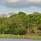 Para 27% dos brasileiros, desmatamento é maior ameaça ao meio ambiente